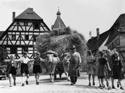 Bonden er barnas helt der han ankommer landsbyen med oksene spendt foran høylasset.